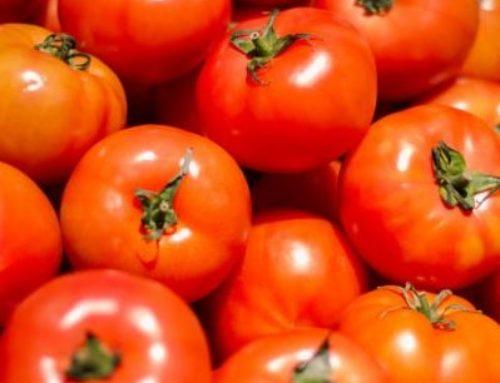 ¡Feliz día del tomate!